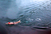 Swimming North Cape